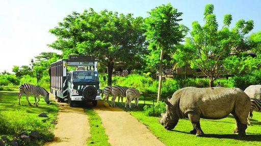 Đến với Phú Quốc du khách sẽ được check in với những loài động vật đáng yêu