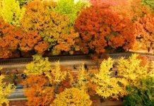 con đường bên Cung điện Deoksugung du lịch hàn quốc mùa thu