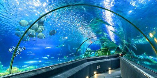 Du lịch Nha Trang - Khám phá Viện Hải Dương Học